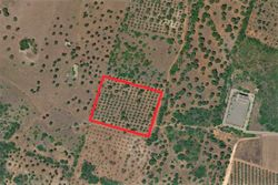 Agricultural land of   ,    square meters - Lot 10000 (Auction 10000)
