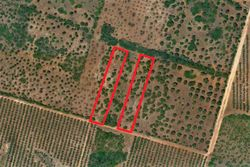Agricultural land of   ,    square meters - Lot 10001 (Auction 10001)