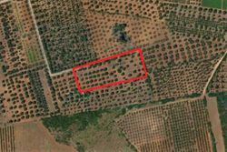 Agricultural land of   .    square meters - Lote 10003 (Subasta 10003)