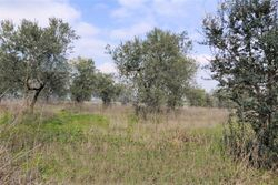 Cultivated land - Lot 10371 (Auction 10371)