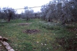 Agricultural land with olive grove - Lote 10402 (Subasta 10402)