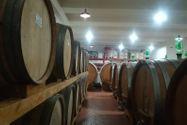 Immagine n1 - Azienda vitivinicola con terreni agricoli - Asta 10800
