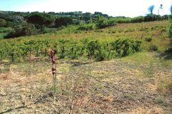 Sette frustoli di terreno agricolo - Lotto 11209 (Asta 11209)