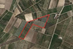 Agricultural land of      sqm - Lot 11556 (Auction 11556)