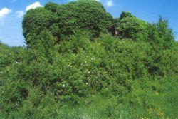 Terreno boschivo con due edifici collabenti - Lotto 12756 (Asta 12756)