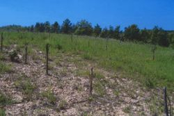 Wooded agricultural land - Lot 12757 (Auction 12757)