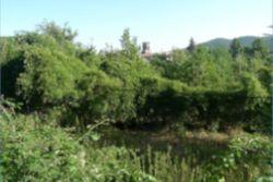 Terreno agricolo di 11849mq - Lotto 12954 (Asta 12954)