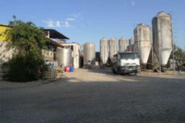 #12955 Azienda agricola con terreni in vendita - foto 3