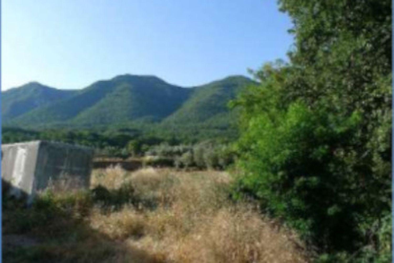 #12955 Azienda agricola con terreni in vendita - foto 5