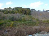 Immagine n0 - Terreno edificabile e versante arborato - Asta 1309