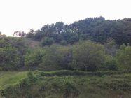 Immagine n4 - Terreno edificabile e versante arborato - Asta 1309