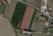 Immagine n0 - Terreno agricolo pianeggiante - Asta 1312