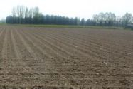Immagine n1 - ½ parte de las tierras agrícolas - Asta 1313