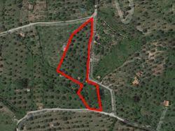 Quota di terreno agricolo di 7030 mq - Lotto 13137 (Asta 13137)