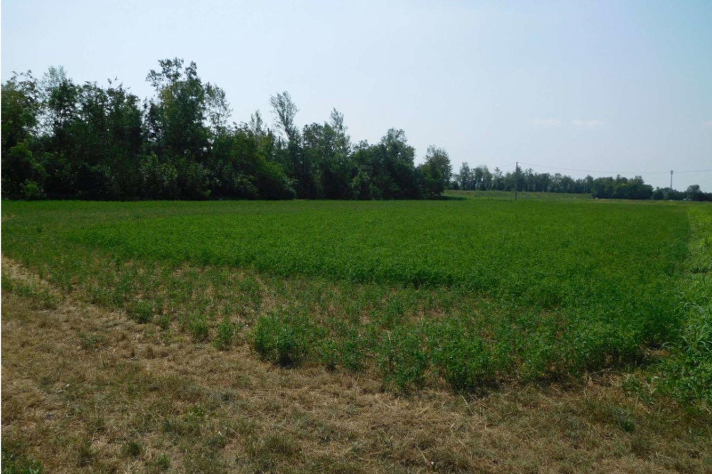 #13255 Capannone agricolo con terreni in vendita - foto 1