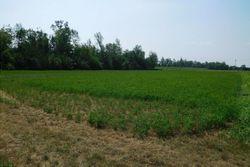 Capannone agricolo con terreni - Lotto 13255 (Asta 13255)