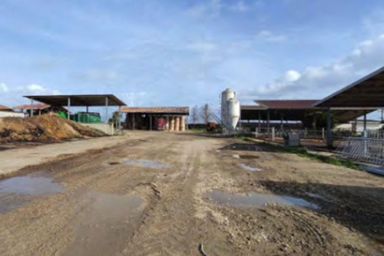 #13598 Azienda agricola bufalina in vendita - foto 5