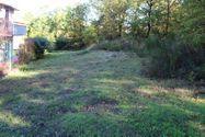 Immagine n0 - Porzione di terreno con alberi ad alto fusto (lotto 4m) - Asta 1402