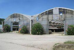 Immobile commerciale - Lotto 3 - San Biagio della Valle - PG