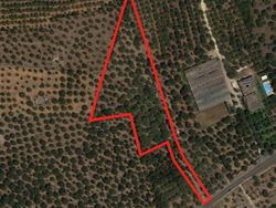 Agricultural land with olive grove  loc. Mercies  - Lot 1430 (Auction 1430)