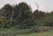 Immagine n2 - 48 terreni agricoli e boschivi sparsi - Asta 1999