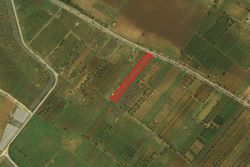 Agricultural land, olive grove of  .    sqm - Lot 2536 (Auction 2536)