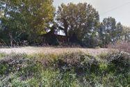 Immagine n6 - Fabbricati diroccati e terreni annessi - Asta 2659