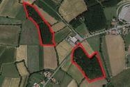 Immagine n0 - Due appezzamenti di terreno agricolo - Asta 3414