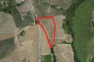 Immagine n2 - Edificio commerciale e quota di terreno agricolo - Asta 4477