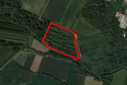 Uncultivated land former poplar grove of   .    sqm - Lot 4954 (Auction 4954)