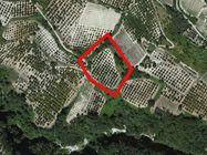 Immagine n0 - Terreno incolto di 5391 mq - Asta 500