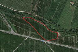 Agricultural land citrus grove - Lot 5370 (Auction 5370)
