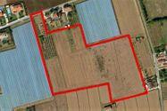 Immagine n0 - Las tierras agrícolas de 44.965 metros cuadrados - Asta 617