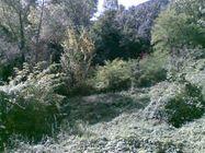 Immagine n2 - Terreno boschivo in zona produttiva - Asta 636