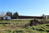 Immagine n0 - Fabbricati di allevamento con terreni misti - Asta 6445