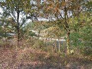 Immagine n3 - Terreno agricolo di 1.137 mq - Asta 6768