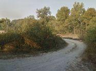 Immagine n5 - Terreno agricolo di 1.137 mq - Asta 6768