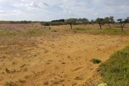 Immagine n1 - Agricultural land of 4870 sqm - Asta 7368