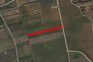 Immagine n0 - Agricultural land of 3980 sqm - Asta 7405