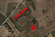 Immagine n0 - Terreni agricoli di 1799 mq - Asta 7406
