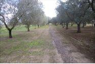 Immagine n1 - Terreni agricoli di 1799 mq - Asta 7406
