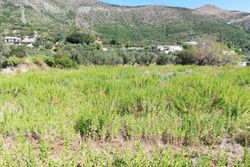 Agricultural land of   .    sqm - Lote 7883 (Subasta 7883)