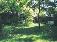 Immagine n0 - Quota 1/2 di giardino piantumato - Asta 815