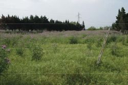 Agricultural land of     sqm - Lot 8484 (Auction 8484)