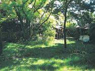 Immagine n1 - Quota 1/2 di giardino piantumato - Asta 879