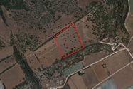 Immagine n0 - Terreno agricolo con ulivi di 29.270 mq - Asta 9058