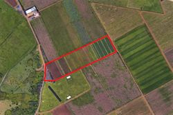 Agricultural land cultivated - Lote 9392 (Subasta 9392)