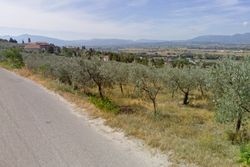 share of olive grove of   .    sqm - Lot 9404 (Auction 9404)