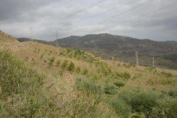 Terreno agricolo a pascolo sup 193980mq