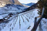 Immagine n14 - Agriturismo in montagna con stalla e terreni - Asta 9881